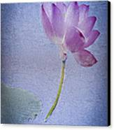Lotus Dream Canvas Print by Jill Balsam