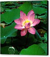 Lotus Flower And Capsule 24a Canvas Print