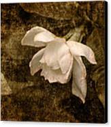 Love Letter Ix Cape Jasmine Gardenia Canvas Print by Jai Johnson