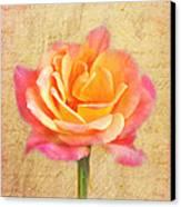 Love Letter Canvas Print by Jai Johnson