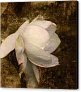 Love Letter Viii Cape Jasmine Gardenia Canvas Print by Jai Johnson