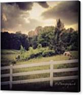 Love This Photo Of A #horse On A #hill Canvas Print by Pete Michaud