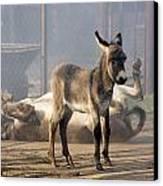 Loving Family Of Donkeys Canvas Print by Odon Czintos