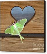 Luna Moth In Love Canvas Print by The Kepharts