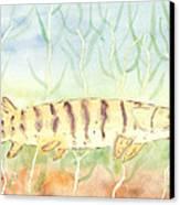 Lurking Tiger Canvas Print