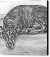 Lying Low - Doberman Pinscher Dog Art Print Canvas Print by Kelli Swan