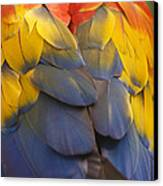 Macaw Parrot Plumes Canvas Print