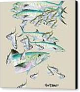 Mackerel Montage Canvas Print