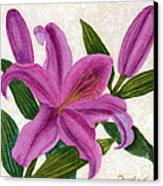 Magenta Lily Canvas Print by Vikki Wicks
