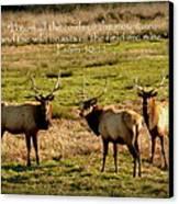 Magnificent Bull Elk Psalm 50 Canvas Print