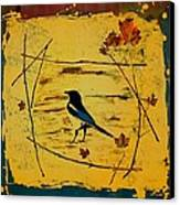 Magpie Framed In Maple Canvas Print by Carolyn Doe