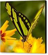 Malachite Butterfly On Flower Canvas Print by Craig Tuttle