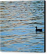 Mallard Duck And Blue Water Canvas Print by Marianne Campolongo