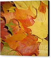 Maple Rainbow Canvas Print