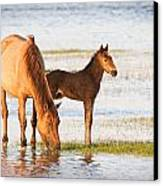 Mare And Foal Canvas Print by Bob Decker