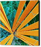 Marine Diatom Algae, Sem Canvas Print by Susumu Nishinaga
