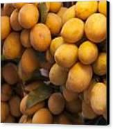 Market Mangoes Canvas Print