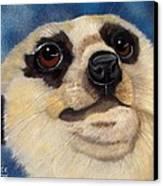 Meerkat Eyes Canvas Print by Debbie LaFrance