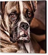 Meet Rocky Canvas Print by Deborah Benoit