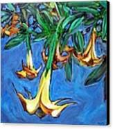 Mendocino Angel Trumpet Canvas Print by Sheila Tajima