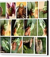 Metamorphosis Of A Cicada Canvas Print by Emanuel Tanjala