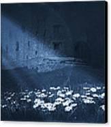 Moon Light Daisies Canvas Print