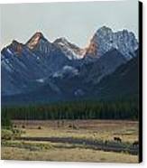 Moose Grazing At Sunset With Mountains Canvas Print by Philippe Widling