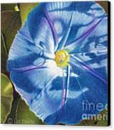Morning Glory B Canvas Print by Elizabeth Dobbs