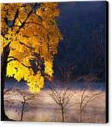 Morning Maple Ll Canvas Print