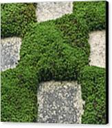 Moss And Stepping Stones Canvas Print