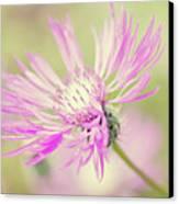 Mountain Cornflower Pink Canvas Print by