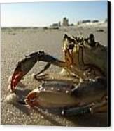 Mr. Crabs Canvas Print by Valeria Donaldson