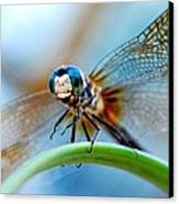 Mr Fly Canvas Print by Kendra Longfellow