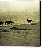 Mustangs Canvas Print