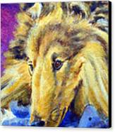 My Blue Teddy - Shetland Sheepdog Canvas Print by Lyn Cook