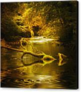 Mystery In Forest Canvas Print