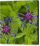 Mystery Wildflower 2 Canvas Print by Sean Griffin