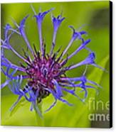 Mystery Wildflower 3 Canvas Print by Sean Griffin