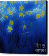 Narcisos Canvas Print by Xoanxo Cespon