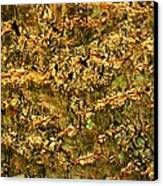 Natural Texture Canvas Print by James Hammen