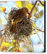 Nesting Instinct Canvas Print by Carol Groenen