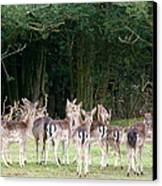 New Forest Deer Canvas Print by Karen Grist