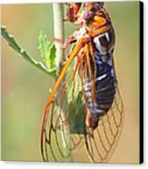 Noisy Cicada Canvas Print