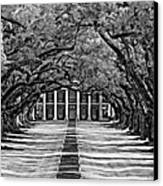 Oak Alley Monochrome Canvas Print by Steve Harrington