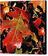 Oak Colors Canvas Print by Darryl Gallegos