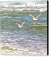 Ocean Seagulls Canvas Print by Cindy Wright
