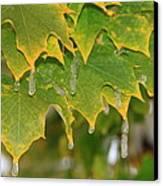 October Icy Ornaments Canvas Print