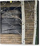 Old Window And Aspen Canvas Print by James Steele