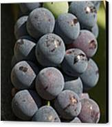 One Green Grape Stands Out In A Bunch Canvas Print by Heather Perry
