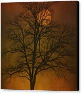 One Lonely Tree Canvas Print by Tom York Images